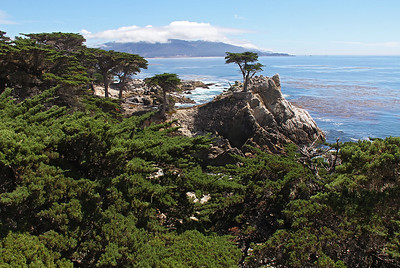 "The famous ""Lone Cypress"" along 17-Mile Drive, with Point Lobos in the background across the bay."
