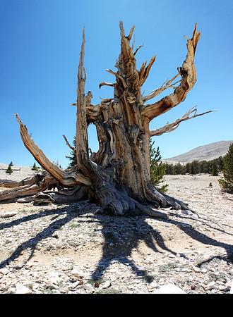 Bristlecone Pine Forest & Other Sierra Adventures