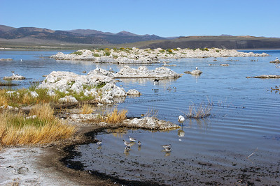 "The lake has a lot of salt in it, and the salt attracts very tiny ""brine flies""; they die in large numbers and their bodies are the blackness you see at the edge of the lake in this image."