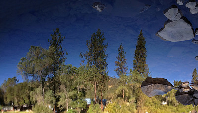 A reflection (turned upside down) in the water of the American River.