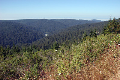 Now we head to the interior where we will hike down into the valley below.  This is the view back toward the coast from the Redwood Creek Overlook, at 2100 feet of altitude.
