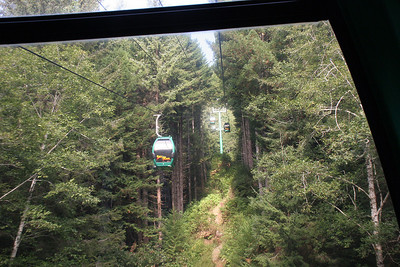 Trees of Mystery cable car ride.