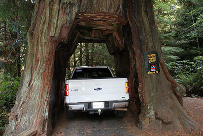 The Tour Thru Tree is privately owned by a Native American Reservation, not part of the public Redwoods National Park system.