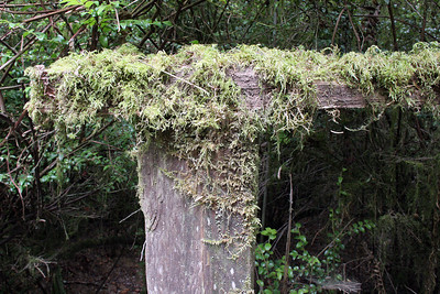 Moss on the hand rails of the trails in Trees of Mystery park.