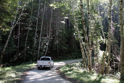 Driving down into the Redwood Creek valley to get to the trailhead to the Tall Trees Grove.