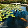 Just watch the fishes and the flowers and you will be rejuvenated.