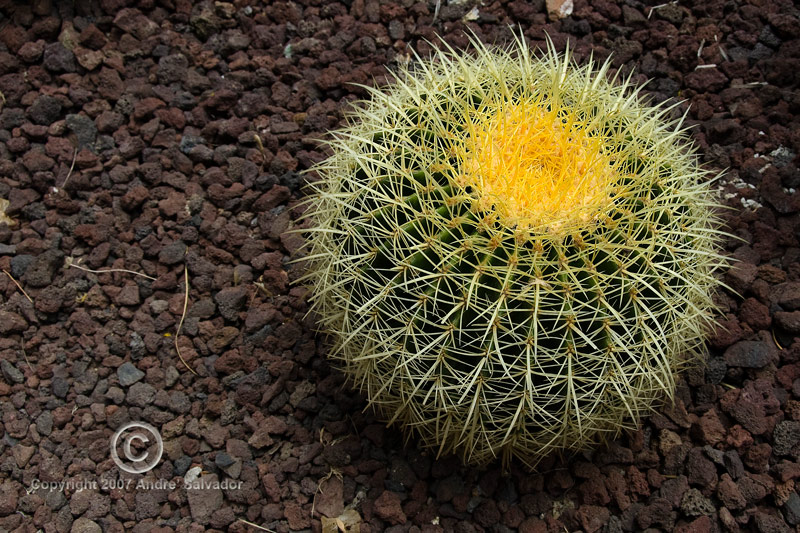 A smaller succulent, beautiful but prickly.