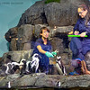 Magellanic penguins being fed and their individual consumption recorded for health monitoring purposes.
