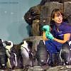 Feeding of the penguins.