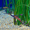 """Sea Horse<br /> <br /> In April 2009 it opened """"The Secret Lives of Seahorses,"""" which includes more than 15 species of seahorses, sea dragons, pipehorses and pipefish and shares stories about the threats they face in the wild."""