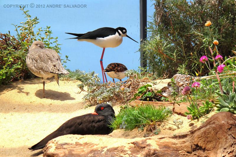 A view of the Monterey Bay Aquarium's Aviary.