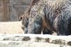 20170815-Zoo-6536