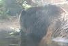 20170815-Zoo-6534