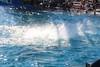 2017-09-25-SeaWorld-7149