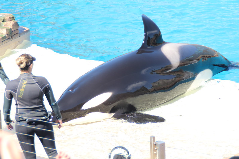 2017-09-25-SeaWorld-7118