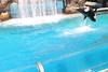 2017-09-25-SeaWorld-7110