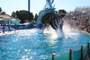 2017-09-25-SeaWorld-7150