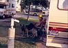 19880700-SteckleParkSantaPaula-0141