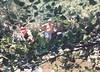 19880700-SteckleParkSantaPaula-0127