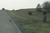 20080928-Pheasant-9491
