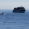 One of the other tour companies. They all end up in this area watching the same resident pod of orcas.