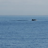 The orcas seem to be avoiding our boat