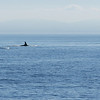 We learned that orca is the preferred name for these whales and not killer whale.
