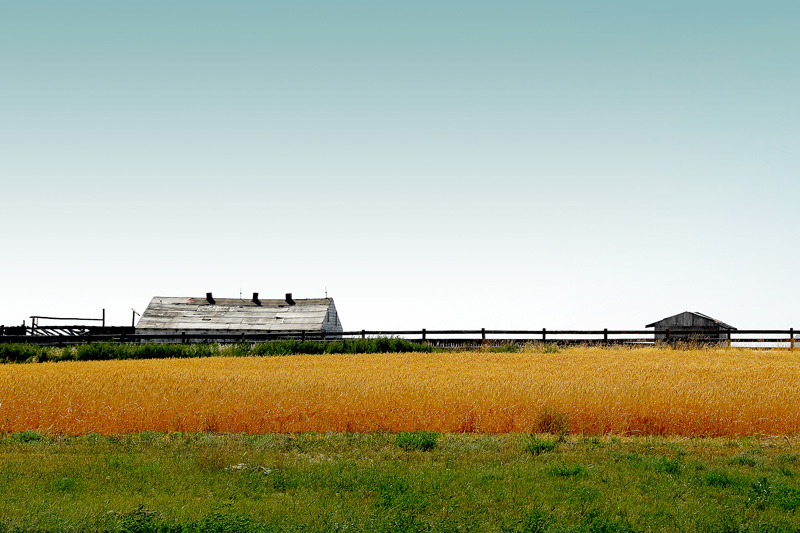 A view of a farm facility with the nice contrast of gold and green.