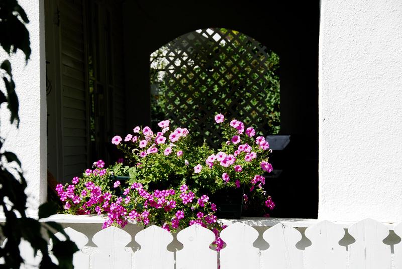 _DSC4633-Neighbor's-Garden-