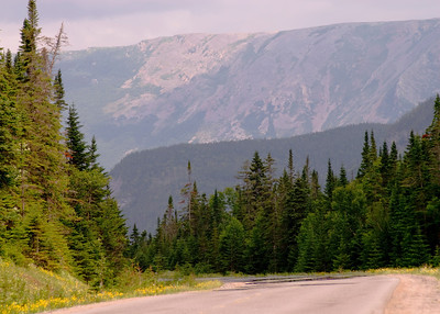 Newfoundland 0095