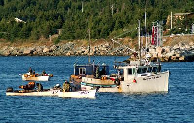 Newfoundland 6103