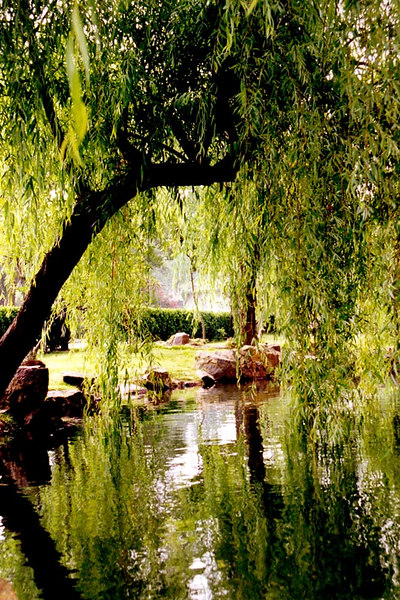 A beautiful and peaceful part of one of the many pretty public gardens in Suzhou.