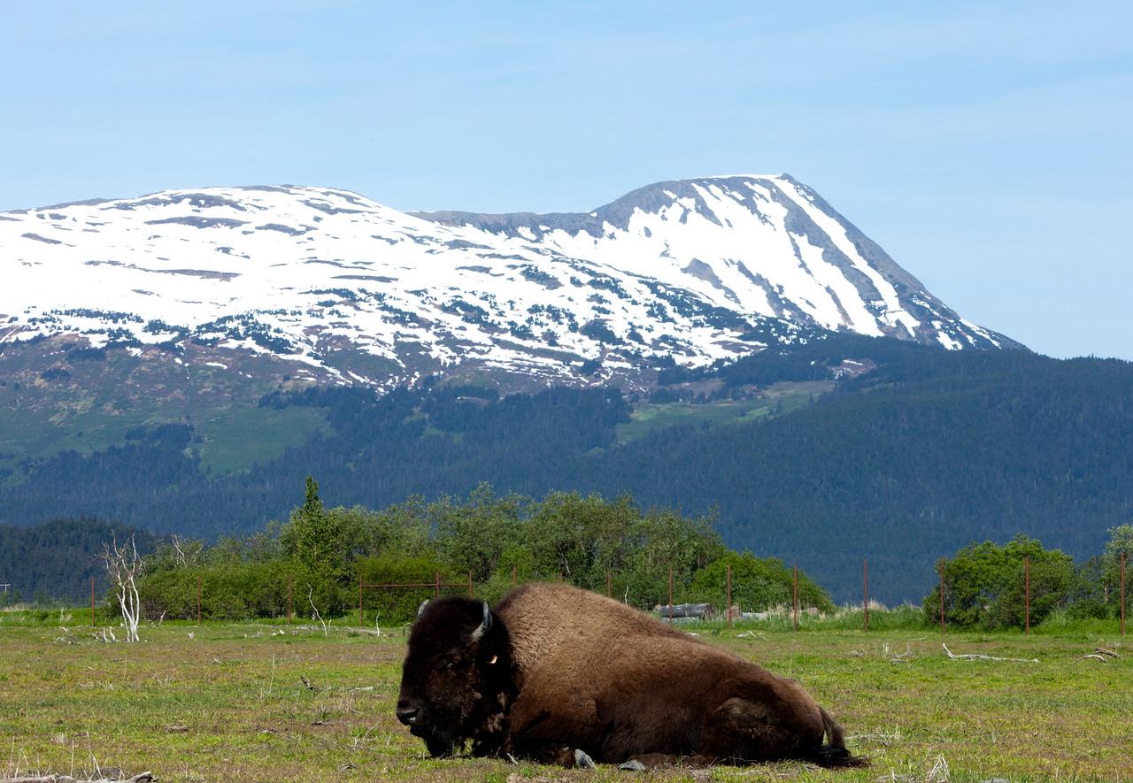 Alaska Wildlife Center