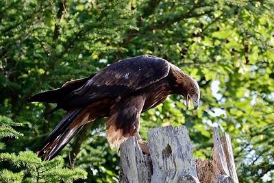 Denmark; Bindslev; Eagleworld; DK