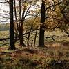 Landscape - Landskab