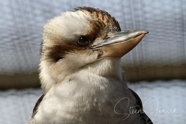 Birds - Fugle