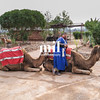 Camel in Marrakech