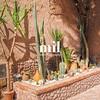 Garden in Marrakech in Morocco in Africa
