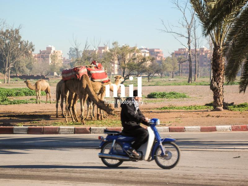 Transport in Marrakech