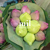Lotus Flower Plant in Thai Market