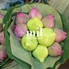 Lotus Flower Plant in Thai Market