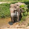 Elephant enjoying their retirement in a rescue sanctuary