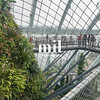 Inside a greenhouse at gardens by the bay in Singapore