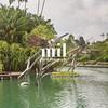 Lake in a tropical garden in Asia