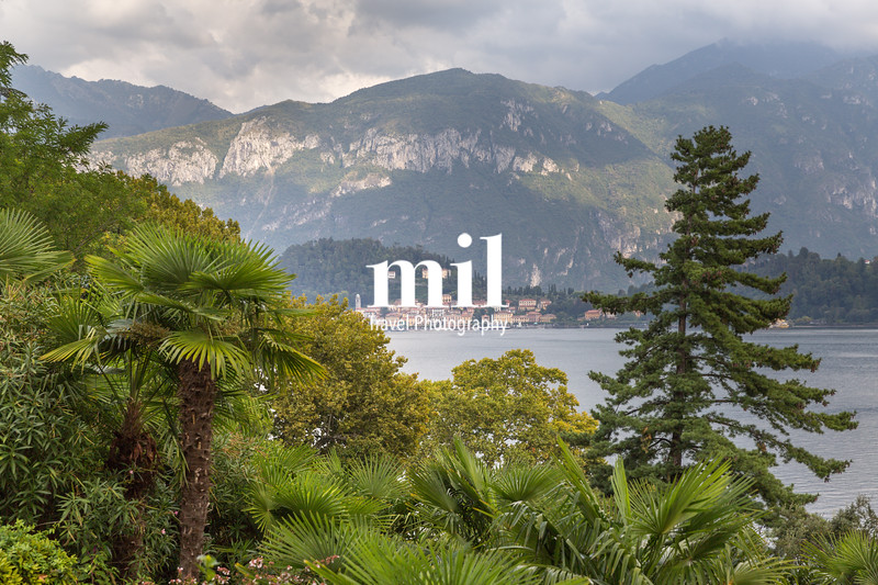 View of the trees  fom the hillside opposite Bellagio on Lake Como