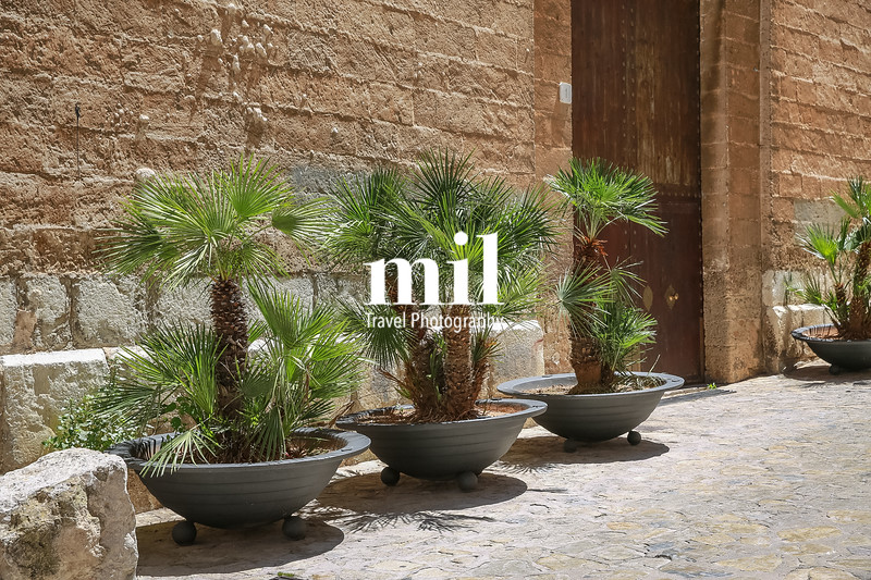 Tropical plants in the city of Palma Majorca