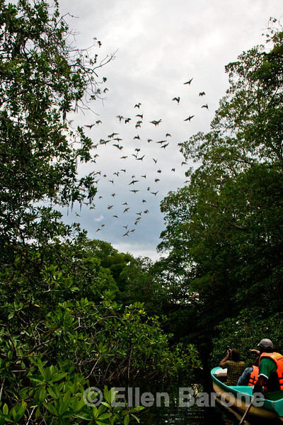 A bird watcher's paradise, Madresal, a community-built eco-friendly beach camp Pacific Coast, Chiapas, Mexico.