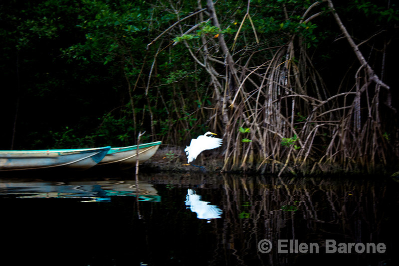 White egret in flight, Madresal, a community-built eco-friendly beach camp. Pacific Coast, Chiapas, Mexico.