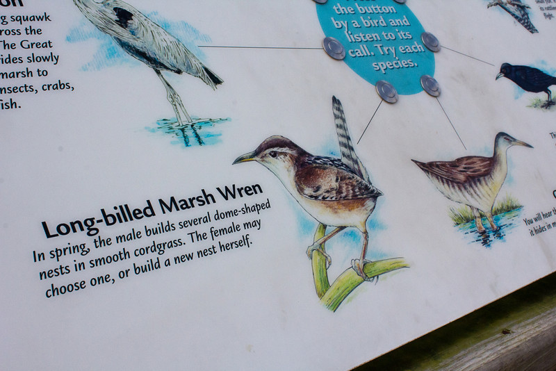 Interactive informational placard, bird species, Coastal Discovery Museum at Honey Horn, Hilton Head Island, South Carolina, USA, North America.