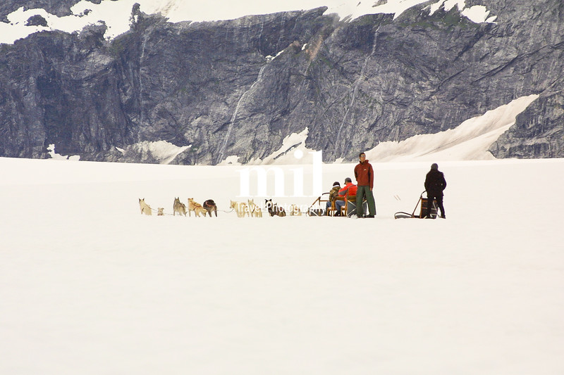 Dog Sledge Team on the glacier